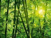 123 - Fotomural Bamboo Forest
