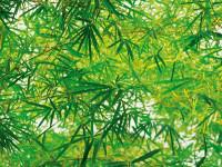 372 - Fotomural Bamboo