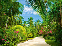 438 - Fotomural Tropical Pathway