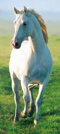 514 - Fotomural White Horse