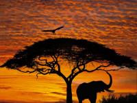 Fotomural 4-501 African Sunset