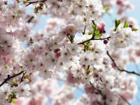 Fotomural 8NW-507 Spring