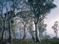 Fotomural 8-523 Fantasy Forest
