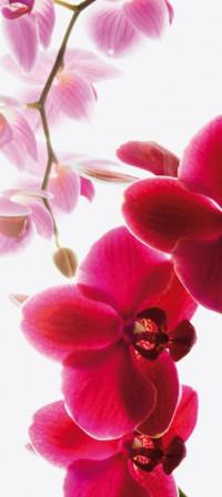 Fotomural D3P Orchid 001