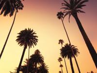 Fotomural W4P California 001