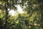 Fotomural XXL4-024 Dschungel
